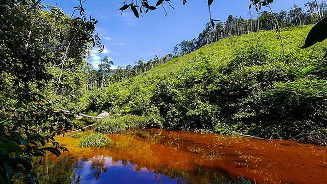 Wisata Hutan Suaka Marga Satwa Kerumutan