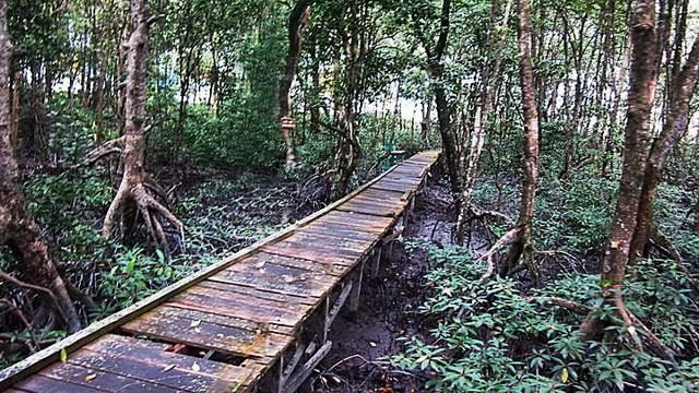 Wisata Kawasan Konservasi Mangrove dan Bekantan