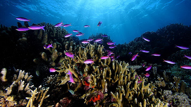 Wisata Pulau Maratua