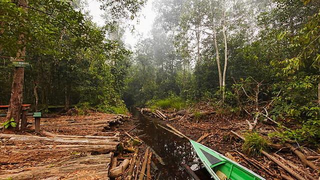 Wisata Taman Nasional Sebangau
