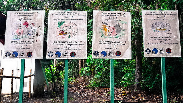 Wisata Taman Nasional Tangkoko