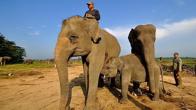 Wisata Taman Nasional Way Kambas